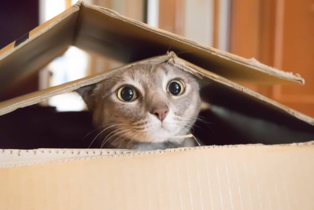 cats-and-moving-to-a-new-home-making-the-transition
