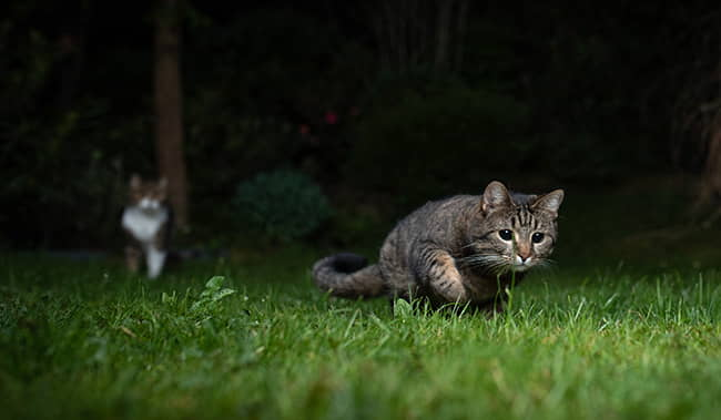 Nighttime-activity-in-Cats