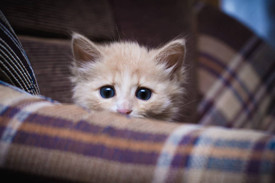 Shy-or-Fearful-Cats