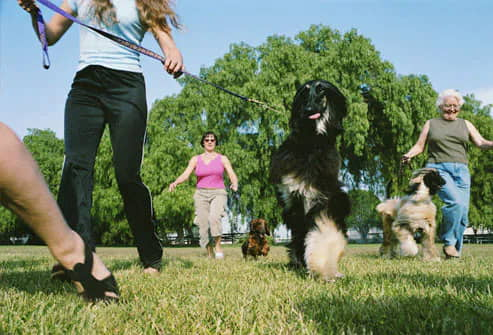 exercising-with-your-dog-dancing