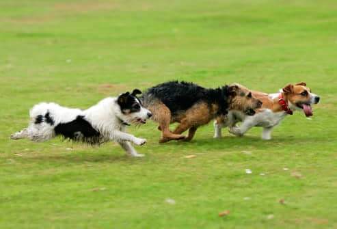 Exercising-With-Your-Dog-Park
