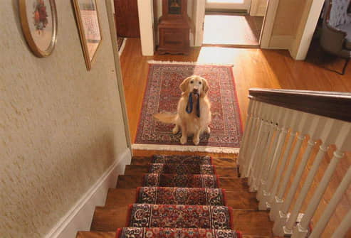 Exercising-With-Your-Dog-Establishing-a-routine