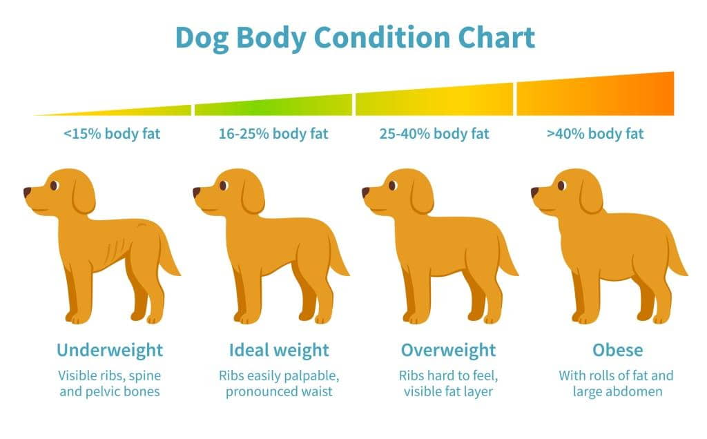 help-for-overweight-dogs