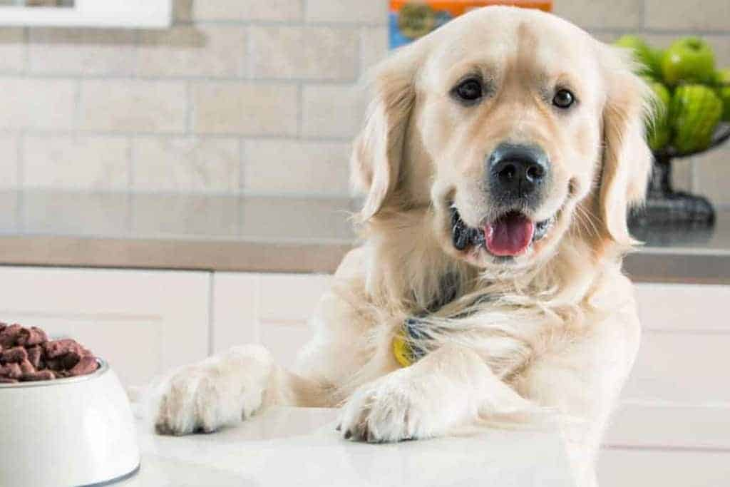 how-to-read-a-dog-food-label