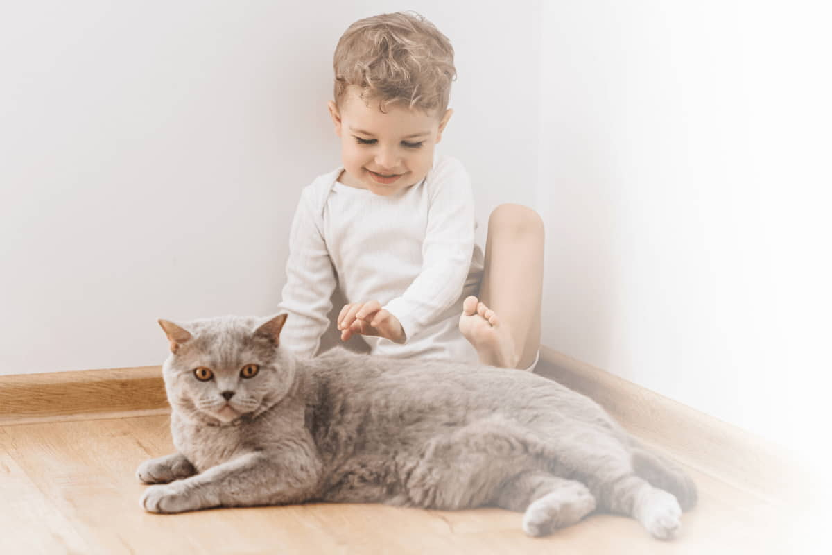 Introducing-Cat-to-Baby-Keeping-Baby-Safe-and-Kitty-Secure