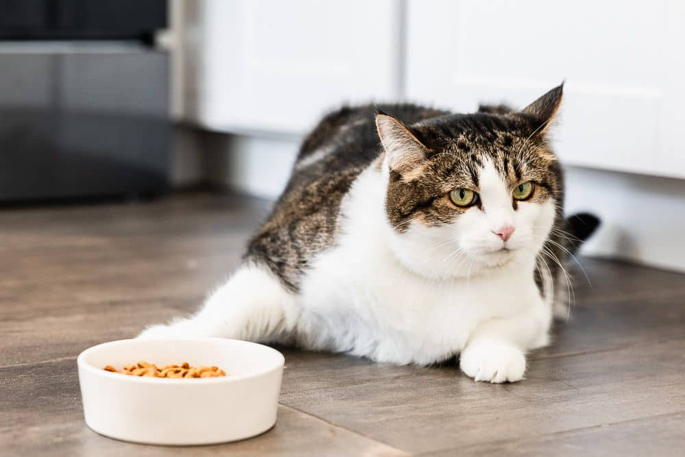 What-to-Do-When-Your-Cat-Won't-Eat